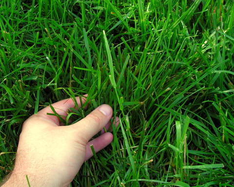 Steps to a Greener Lawn