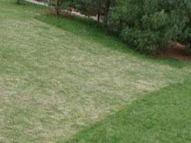 Lawn Scalping