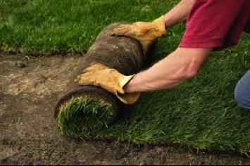 TN Lawn Renovation